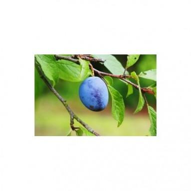 Huile de prune - 50ml
