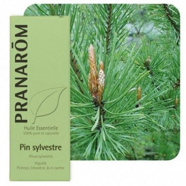 Huile essentielle de Pin sylvestre BIO - 10 ml - Pranarôm