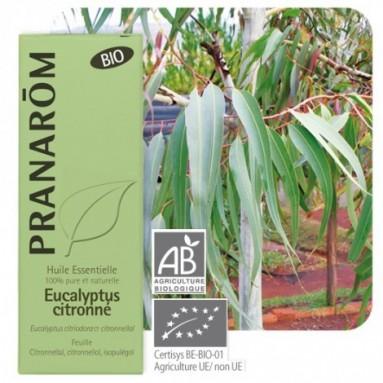 Huile essentielle d'Eucalyptus citronné BIO - 10 ml - Pranarôm
