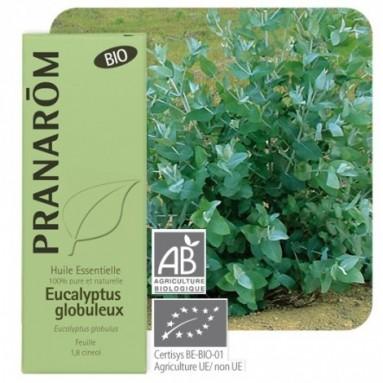 Huile essentielle d'Eucalyptus globulus BIO - 10 ml - Pranarôm