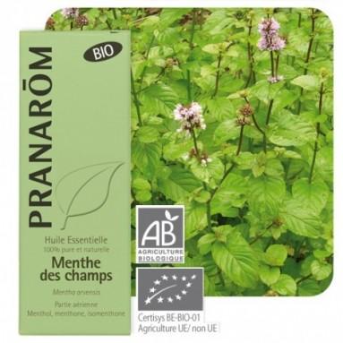 Huile essentielle de Menthe des champs BIO - 10 ml - Pranarôm