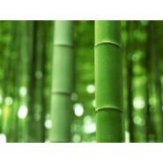 Extrait concentré de bambou