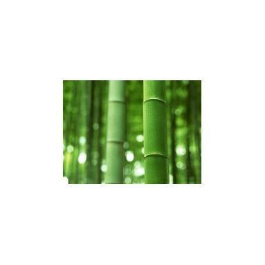 Hydrolat de Bambou - 200ml