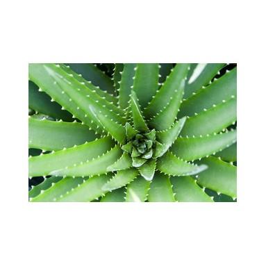 Aloe Vera - 200ml