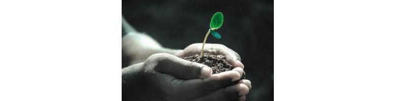 Soins par les plantes